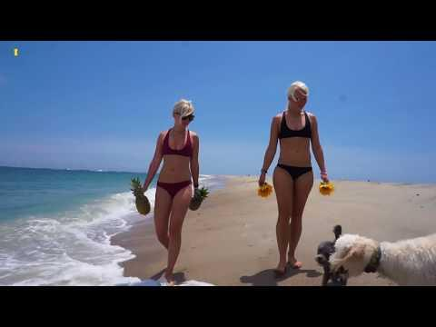 Пальмы, море, пляж, вкусняшки, девушки  4К качество  4K UHD