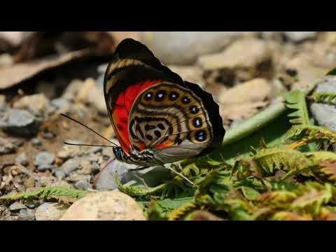 Красота бабочек в 4К качестве 2017 4K UHD